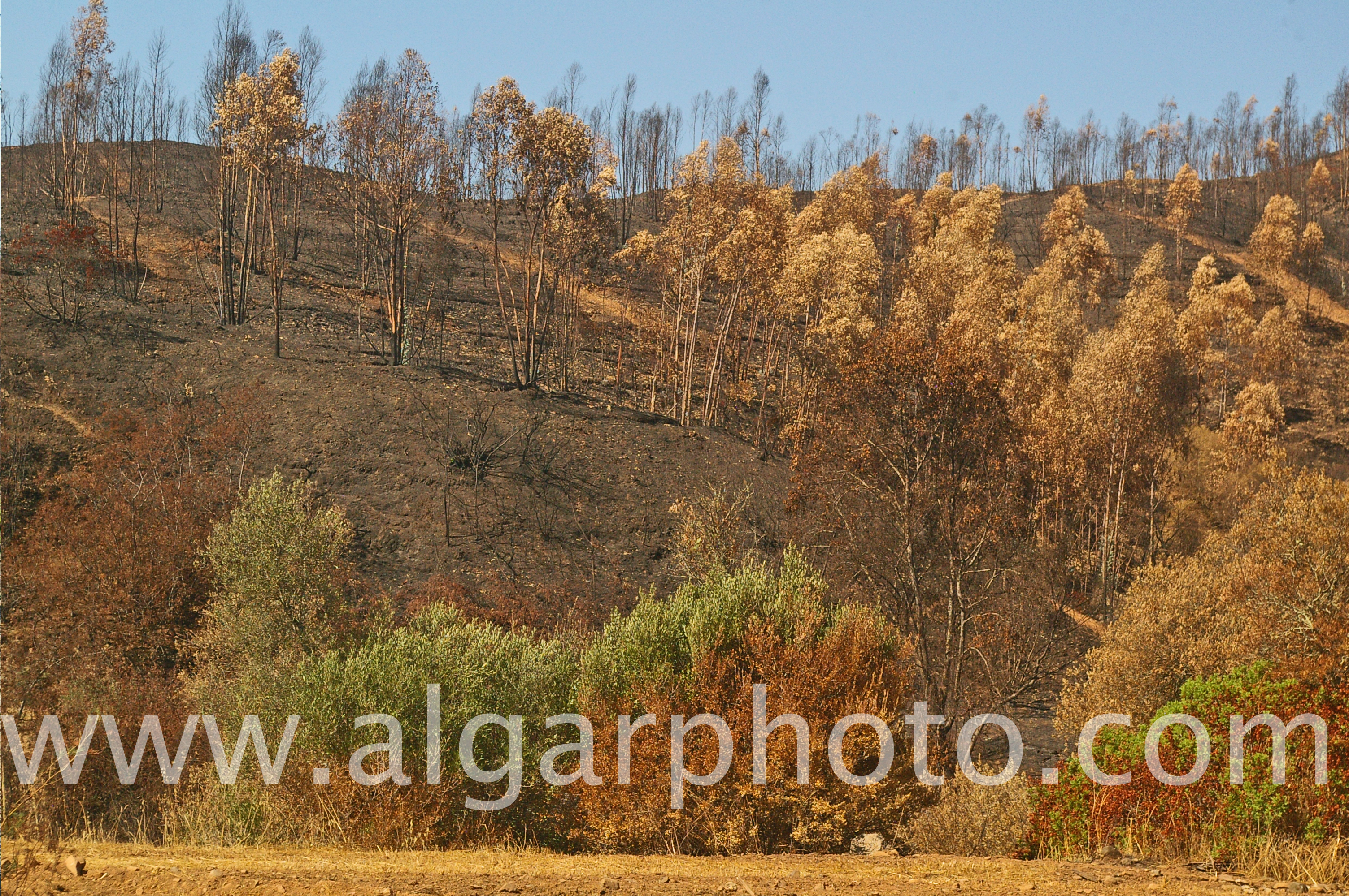 Hillsides ravaged by fire along the N266 road near Rasmalho, Monchique, Algarve, Portugal