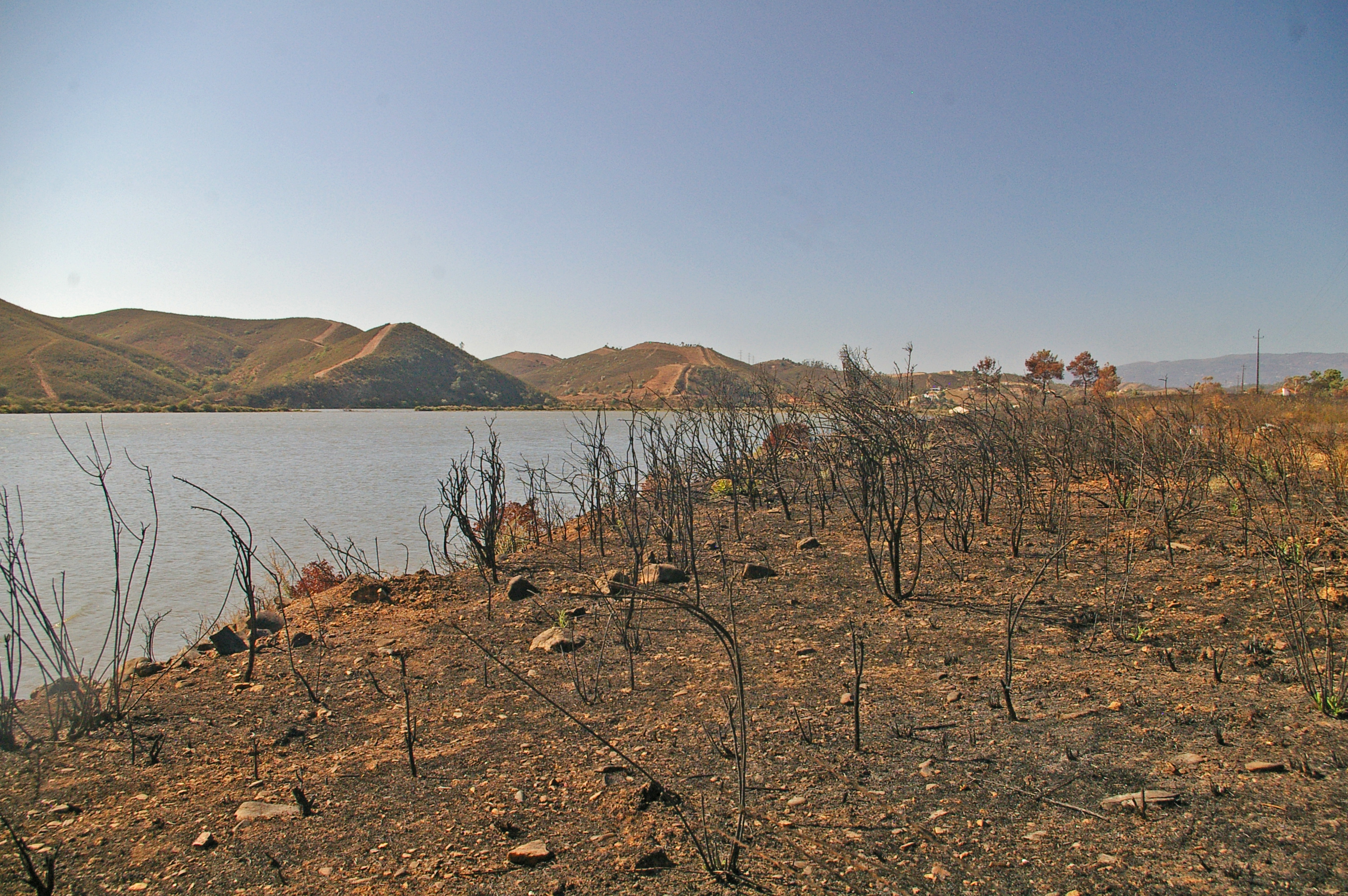 An apiary destroyed by the wildfires near Silves, Algarve, Portugal