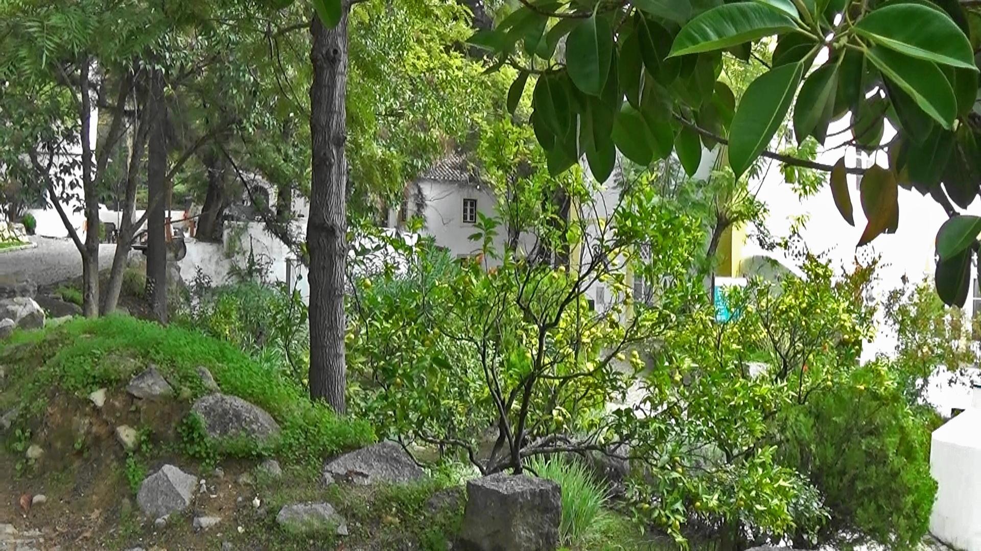green trees at Caldas de Monchique