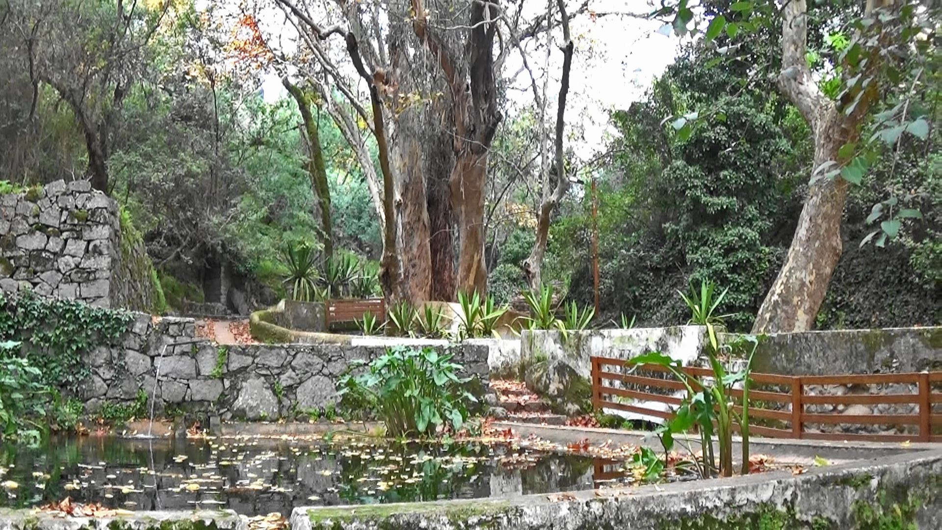 trees at Caldas de Monchique